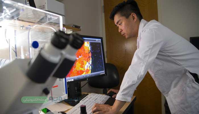 سلول بنیادی شاید روزی به درمان ماهیچه های آسیب دیده کمک کند